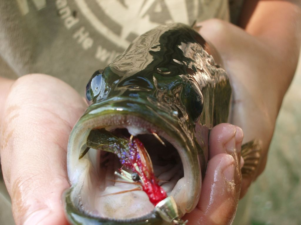 Braden's crayfish inside of my bass