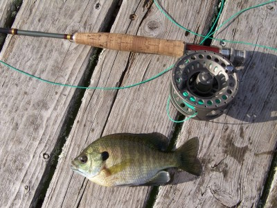 Rock bass 3 brothers flies for Fly fishing for bluegill