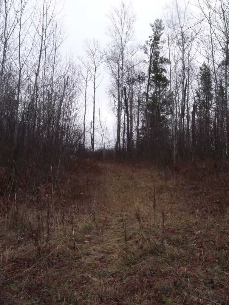 Lots of old logging trails to walk