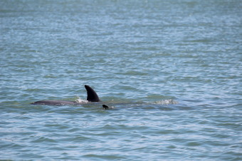A pod of three dolphins swam over and checked us out while boating in a bay.