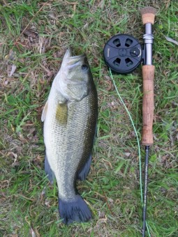 3 pounds 11 ounce bass on a fly rod in Minnesota on meat whistle