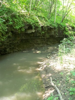 Cliff pool on a feeder creek