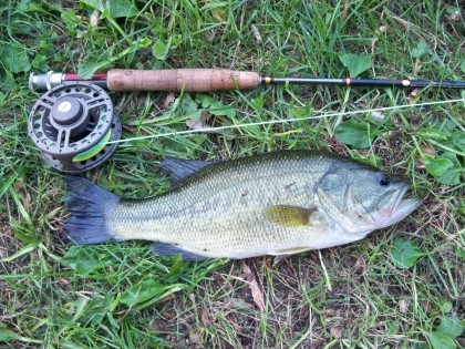 fly-caught largemouth
