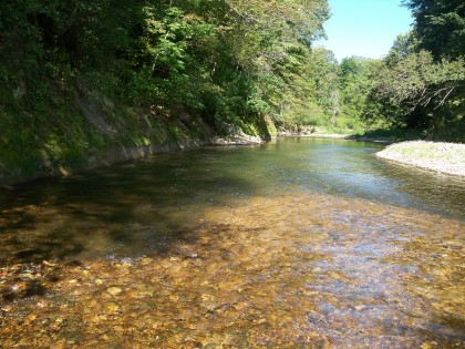 South Branch Root River fly fishing