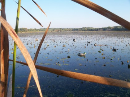 Morning in the duck blind