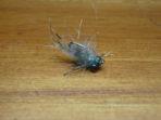 #14 'Gill Shrimp (1)
